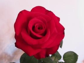 www.rosalindarmorgan.com